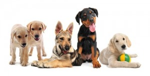Cannie Canines puppy training